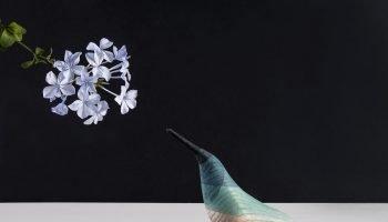 dipped-watercolor-bird-sculptures-immersed-birds-moises-hernandez-4-58c8f4b8e9321__880