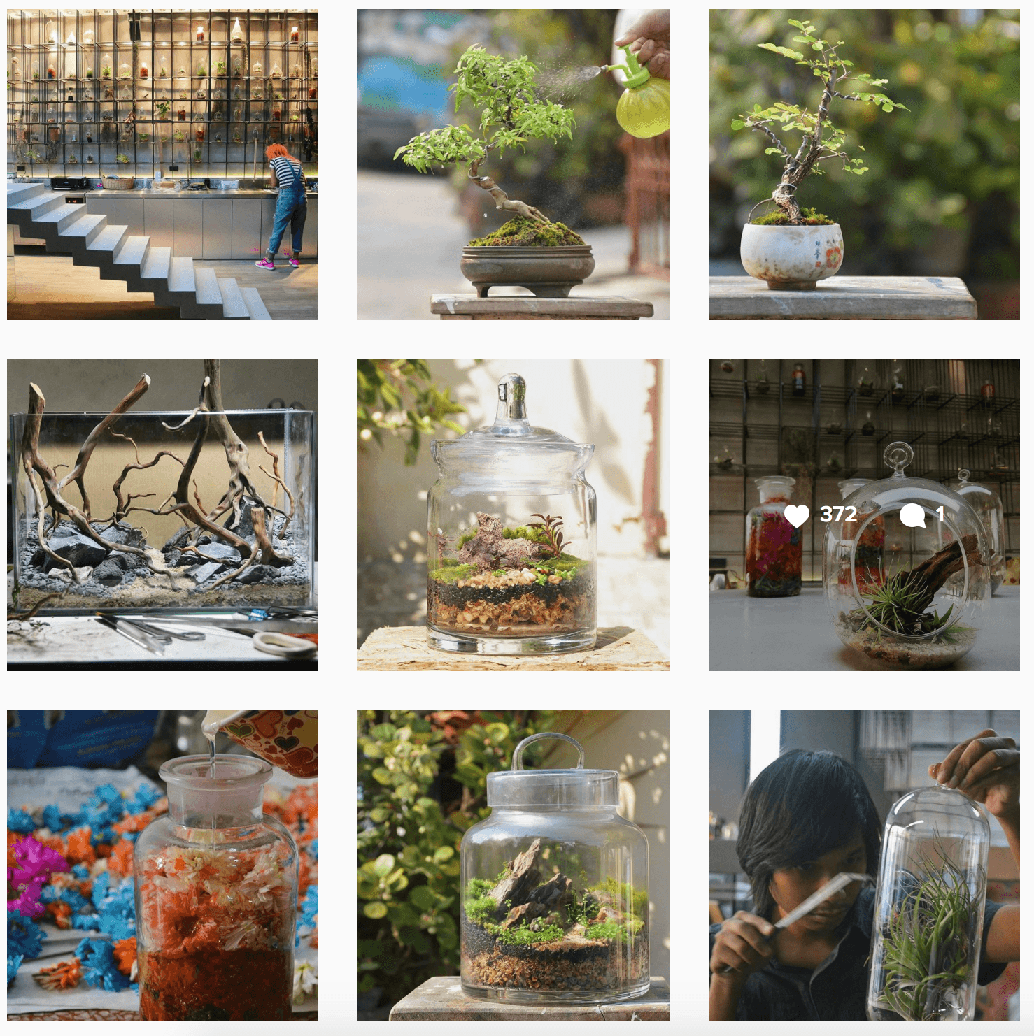 3 Instagram Accounts To Follow for Beautiful Terrarium Ideas