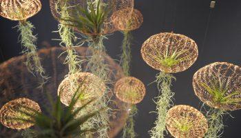 carolijn slottje studio air planting jellyfish