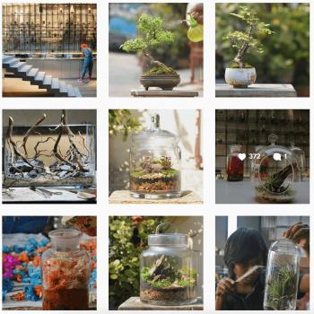 instagram terrarium