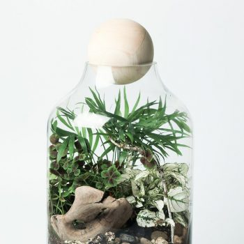 DIY Terrarium Kit - Lucky Gardenere