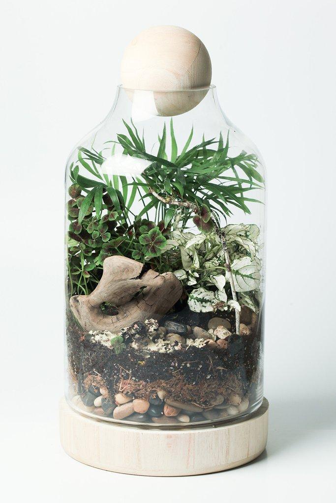 DIY Terrarium Kit - Lucky Gardenere